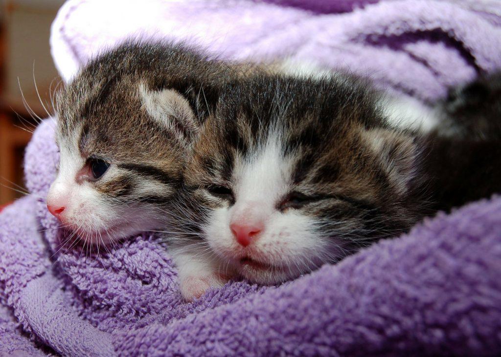 Nauka angielskiego online - Angielski Słówka - Blog o języku angielskim - Cat