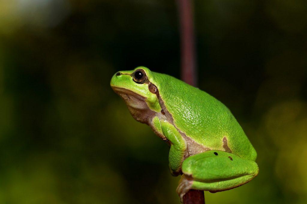 Nauka angielskiego online - Angielski Słówka - Blog o języku angielskim - Frog