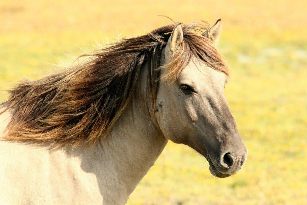 Nauka angielskiego online - Angielski Słówka - Blog o języku angielskim - Horse