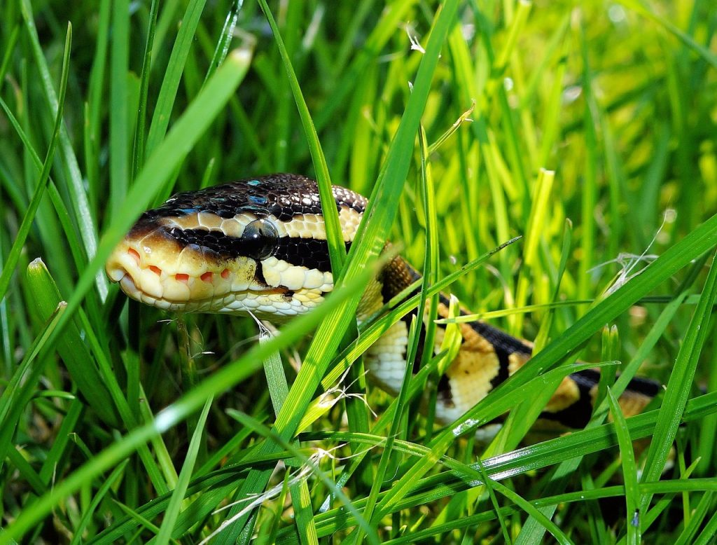 Nauka angielskiego online - Angielski Słówka - Blog o języku angielskim - Snake