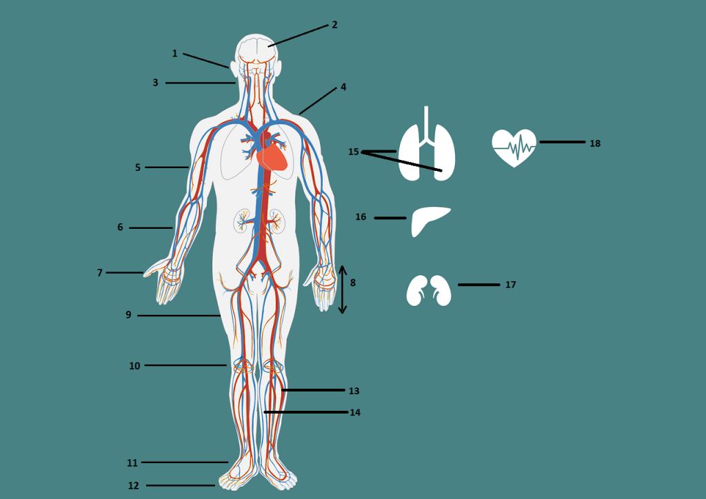 Nauka angielskiego online - Angielski Słówka - Blog o języku angielskim - Body parts