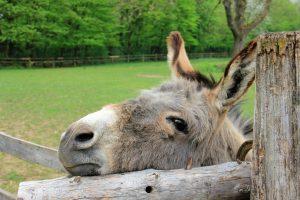 Nauka angielskiego online - Angielski Słówka - Blog o języku angielskim - Donkey