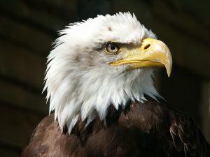 Nauka angielskiego online - Angielski Słówka - Blog o języku angielskim - Eagle