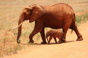 Nauka angielskiego online - Angielski Słówka - Blog o języku angielskim - Elephant