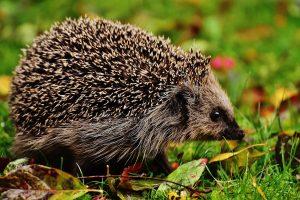 Nauka angielskiego online - Angielski Słówka - Blog o języku angielskim - Hedgehog
