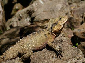 Nauka angielskiego online - Angielski Słówka - Blog o języku angielskim - Lizard