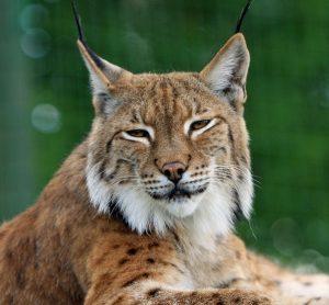 Nauka angielskiego online - Angielski Słówka - Blog o języku angielskim - Lynx