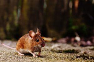 Nauka angielskiego online - Angielski Słówka - Blog o języku angielskim - Mouse