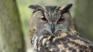 Nauka angielskiego online - Angielski Słówka - Blog o języku angielskim - Owl