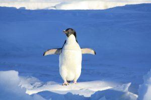 Nauka angielskiego online - Angielski Słówka - Blog o języku angielskim - Penguin