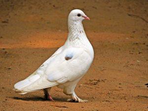 Nauka angielskiego online - Angielski Słówka - Blog o języku angielskim - Pigeon