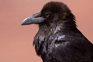 Nauka angielskiego online - Angielski Słówka - Blog o języku angielskim - Raven