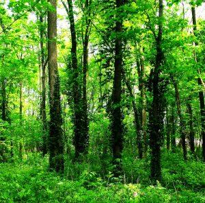 Nauka angielskiego online - Angielski Słówka - Blog o języku angielskim - Dense forest