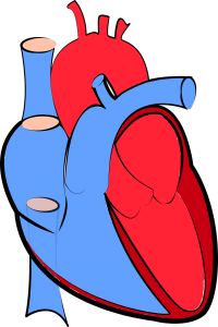 Nauka angielskiego online - Angielski Słówka - Blog o języku angielskim - Heart disease