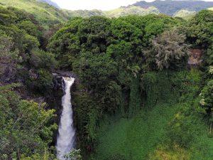 Nauka angielskiego online - Angielski Słówka - Blog o języku angielskim - Rainforest